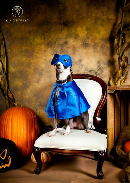 Halloween_Pet-by-KingStreetStudios.com-17