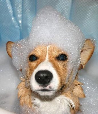 Kako kupati psa
